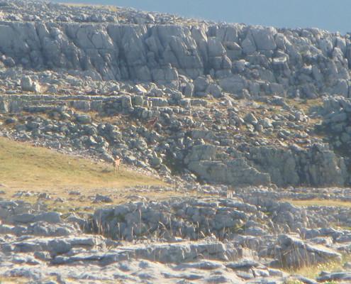 Barranco de la Capradiza